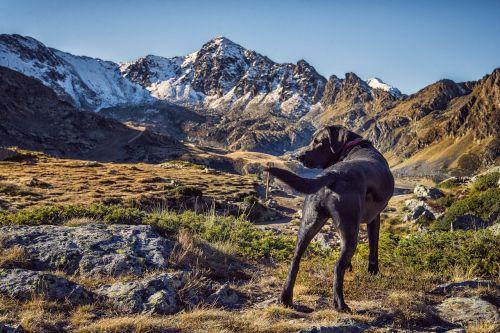 dog animal mountain