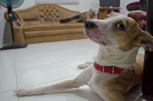dog faithful friend pet