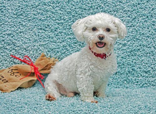 šuo,gyvūnas,lojalumas,mielas,keturkampis,šuniukas,augintiniai,Draugystė