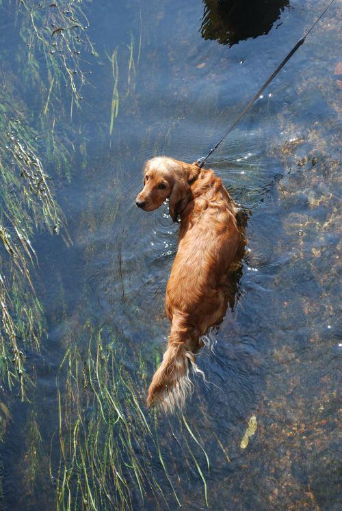 dog water doggy