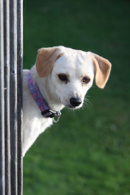 dog peeking railing