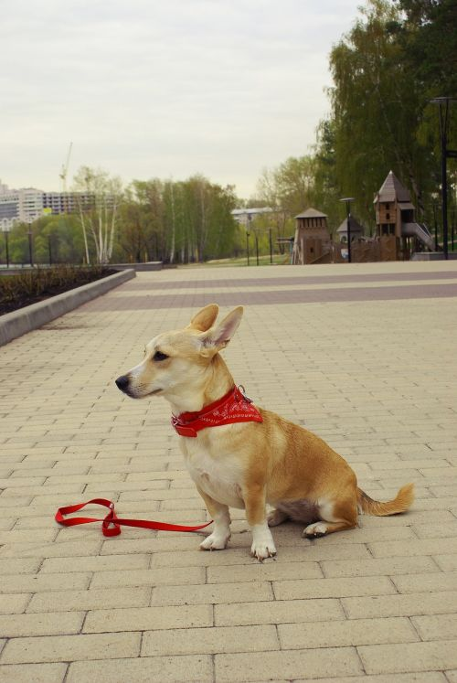 dog park city