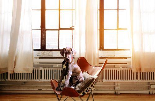 dog chair boss