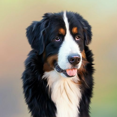 dog bernese mountain dog berner