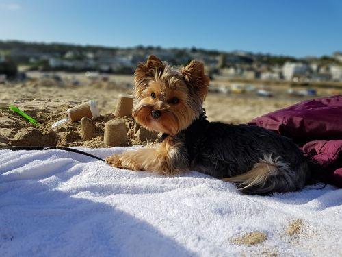 dog water sea