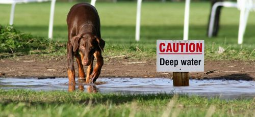 dog water sign
