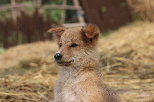 šuo,mielas šuo,mielas,naminis gyvūnėlis,gyvūnas,vidaus,žavinga,portretas,Draugystė,paklusnus,šunys,jaunas