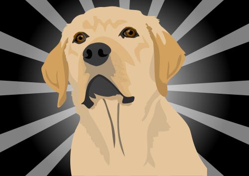 dog labrador puppy