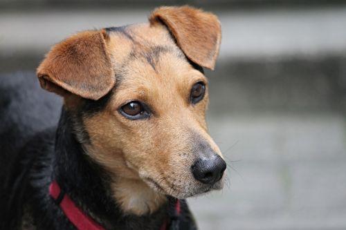 dog friend hybrid