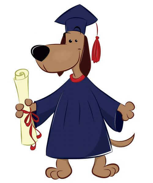 dog graduate animals