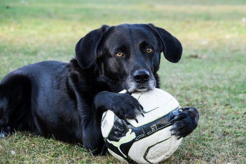 dog ball sweet