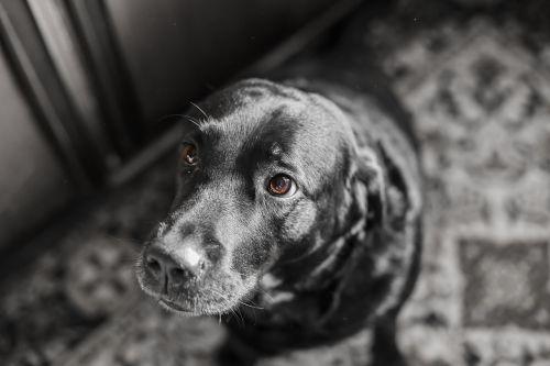 dog animals portrait