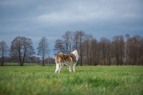 dog grass nature