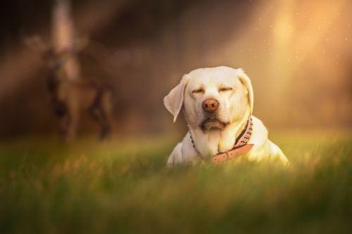 dog grass meadow