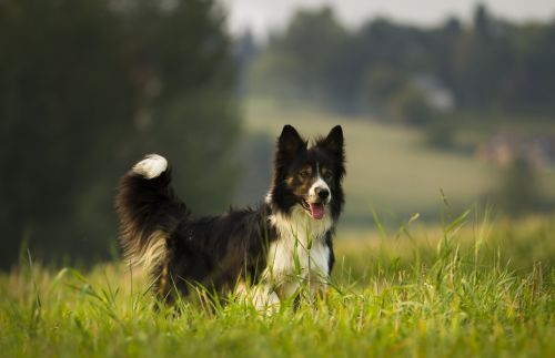 dog mammal animal