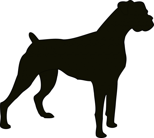 dog pedigreed pedigree