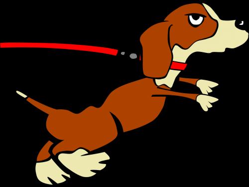 dog puppy leashed