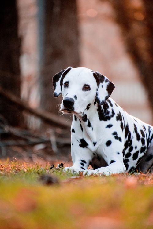 dog cute animal