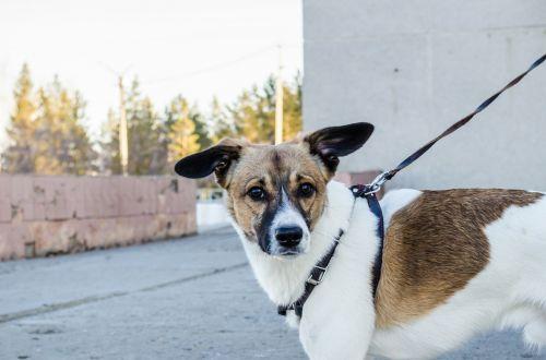 dog pet dog on a leash