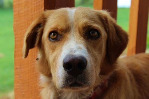 dog pet canine