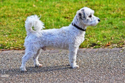 dog canine animal