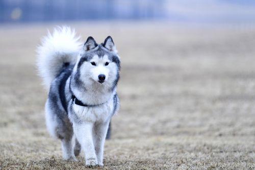 dog animal mammal