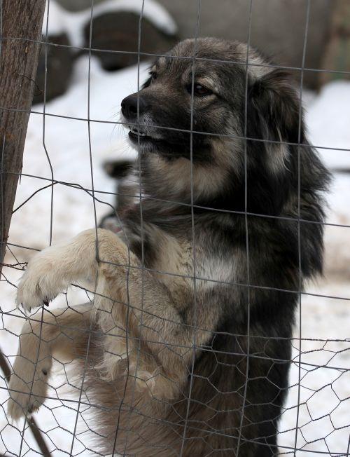 dog fence calling