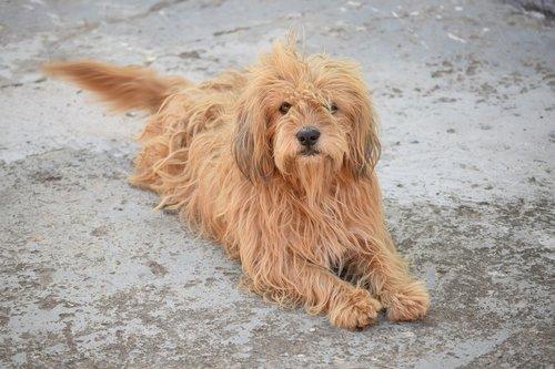 dog  animal  cute