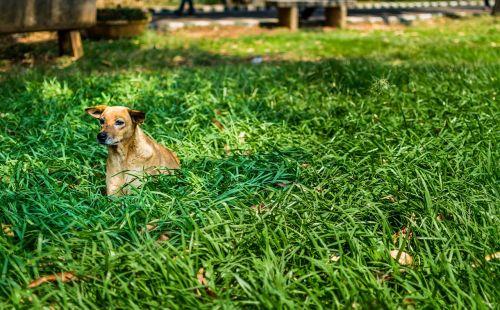 dog alone green