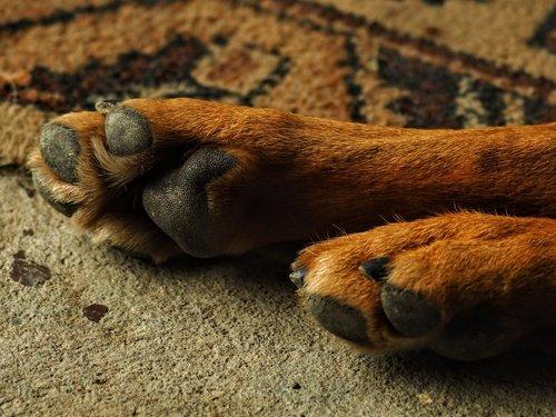 dog  favorite  paw