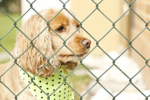 dog  dog behind bars  dog locked up