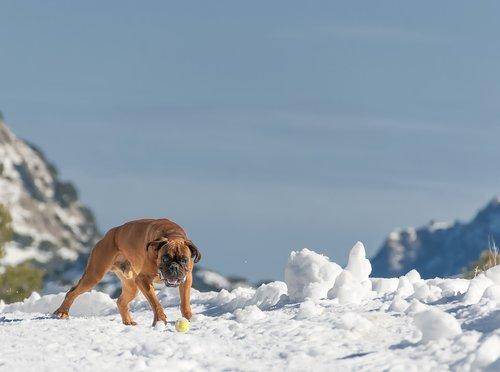 dog  mallorca  snow