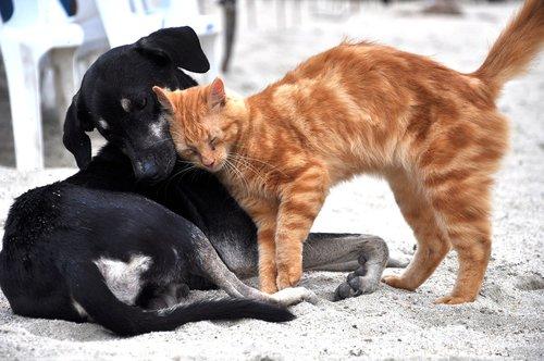 dog  cat  animals