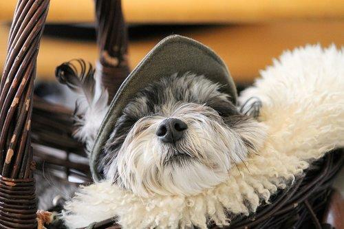 dog  dog snout  fur