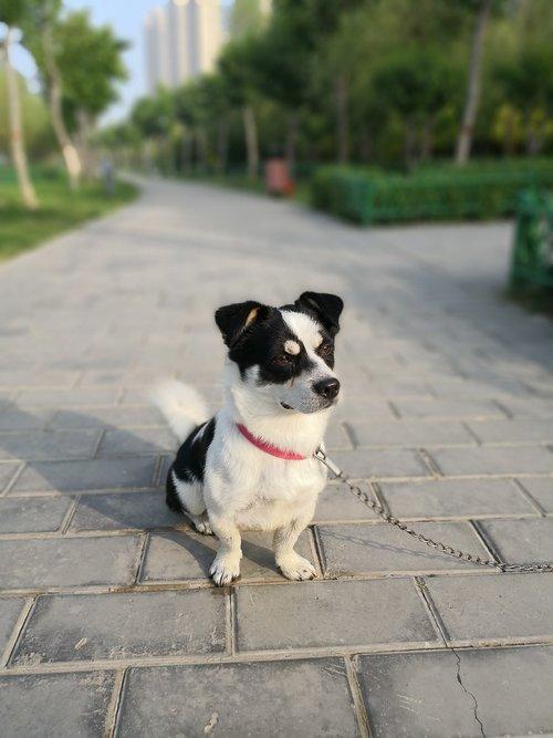 dog  collar  bricks