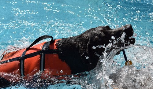 dog  pool  animal physiotherapy