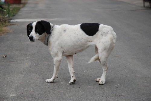 dog  stray dog  puppy