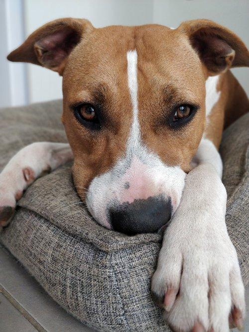 dog  baby  cushion