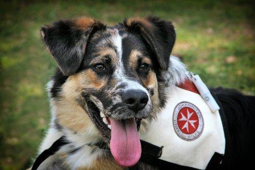 dog  rescue  help