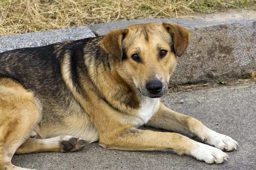 dog  homeless  look