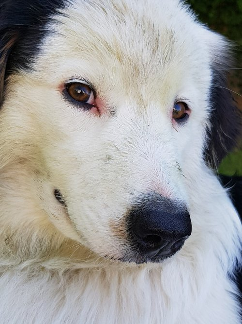 dog  white  black