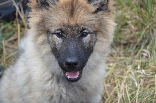 dog  portrait puppy  pup