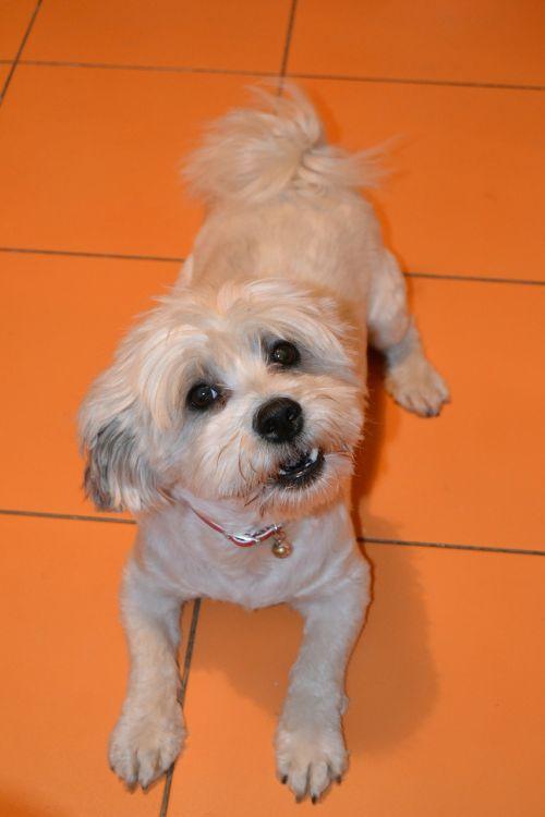 dog puppy canine