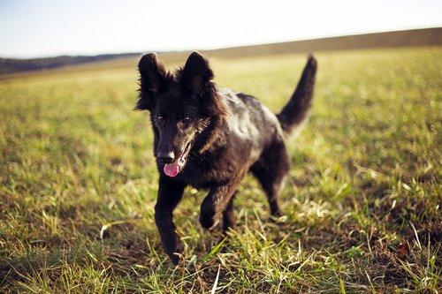 dog  run  nature
