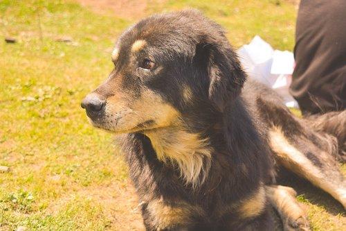 dog  grass  filter