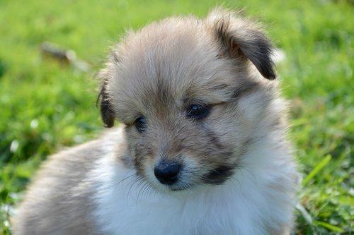 dog  puppy  pup