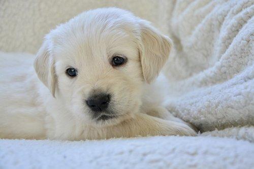 dog  puppy  portrait