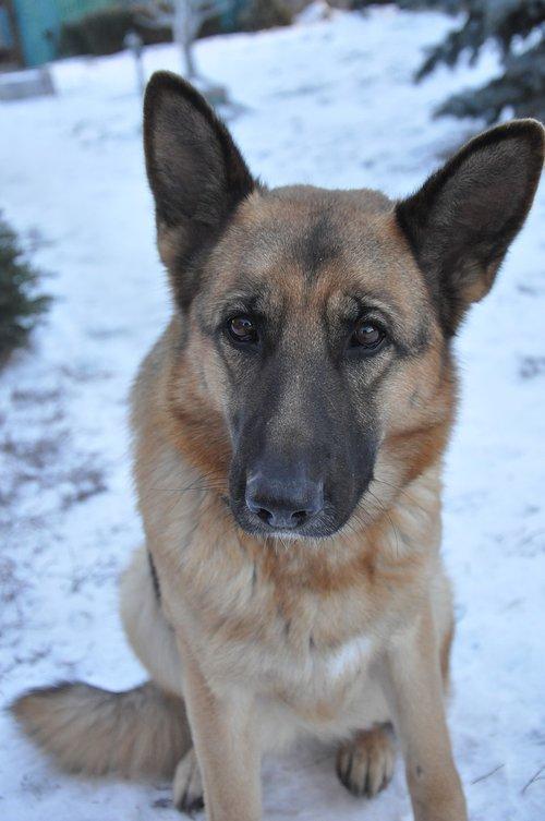 dog  training  snow
