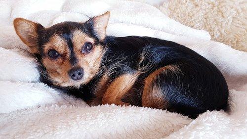 dog  cuddly  cozy