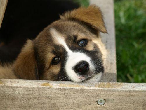 dog puppy dog's nose